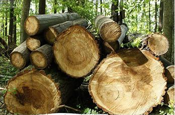 木制包装箱如何对货物产生保护作用